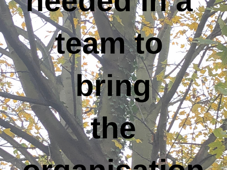 Everybody is needed in a team to bring the organisation vision
