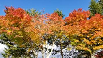 秋!紅葉!そして冬の準備