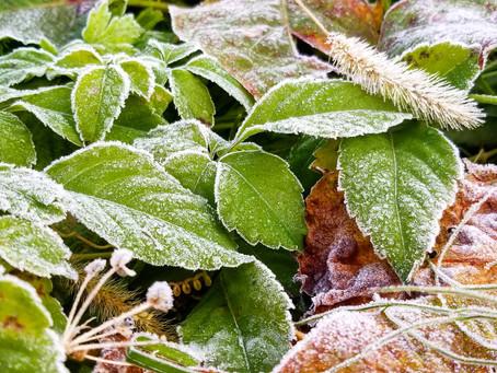 立冬 そして…