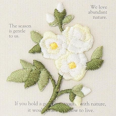 White roses 457-968