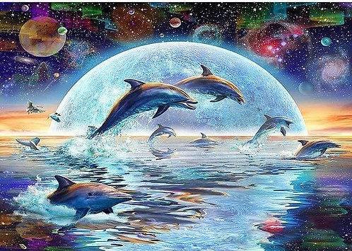 DYS073 Dolphin Galaxy