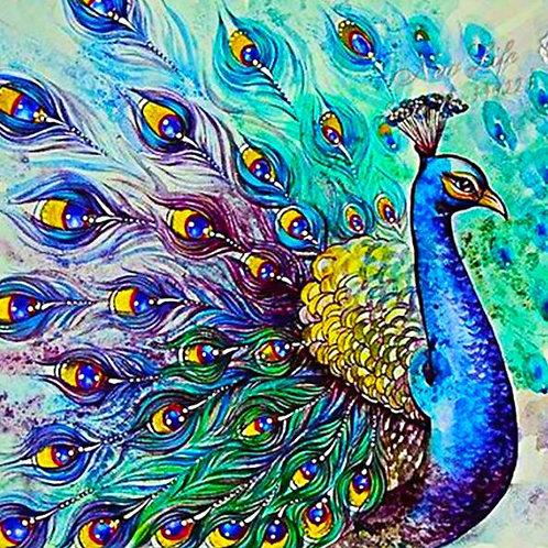 M729 Peacock Open