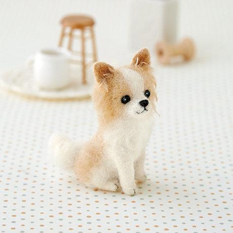 Chihuahua 441-422