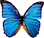 butterfly_PNG1006.png