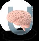 UMKB Brain