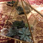 Terrarium succulent centerpiece