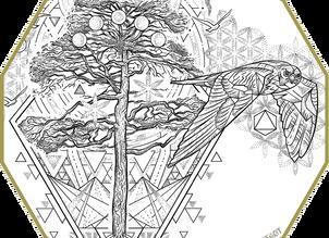 CUSTOM INK  Sacred Ponderosa