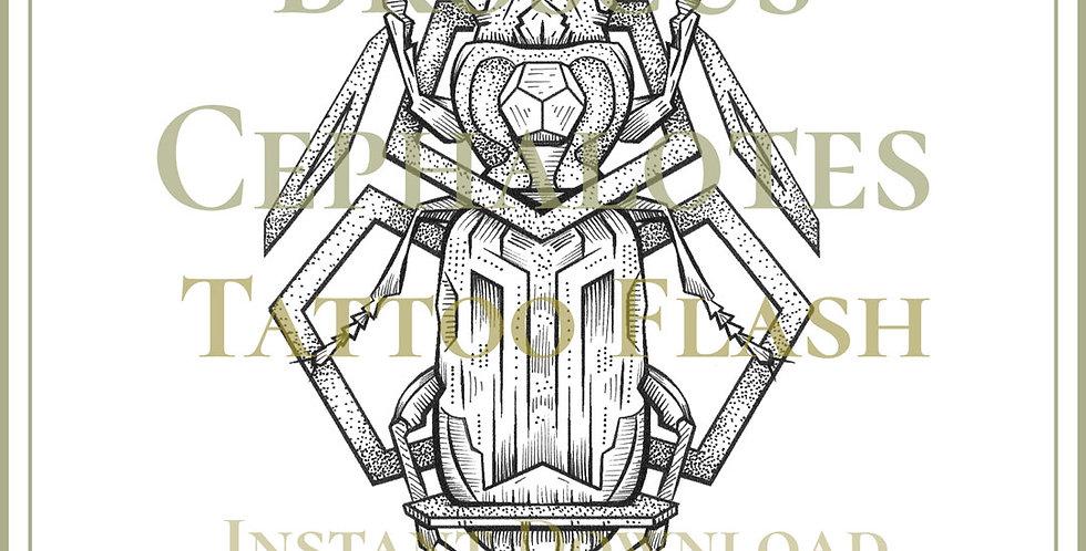 BEETLE 9 | Broscus Cephalotes