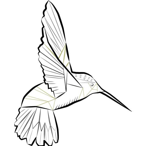 Hummingbird | Vector Art | Line Drawing | Punctured Artefact