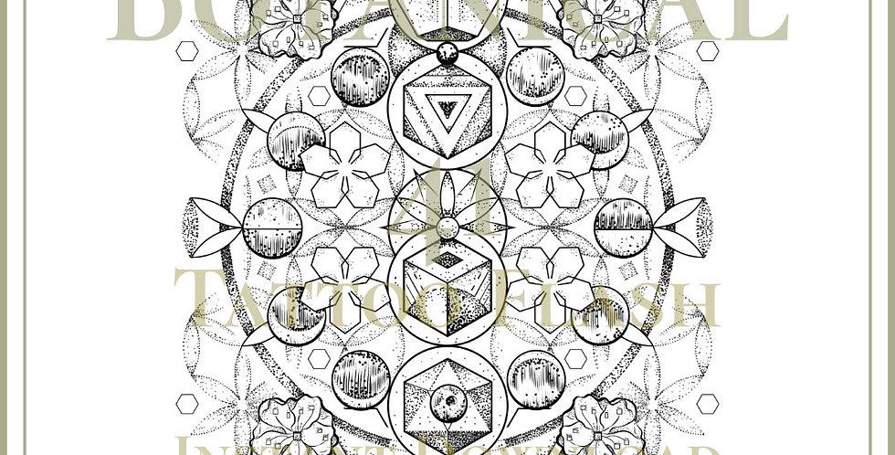 BOTANICAL 41 | Cosmic Blossom