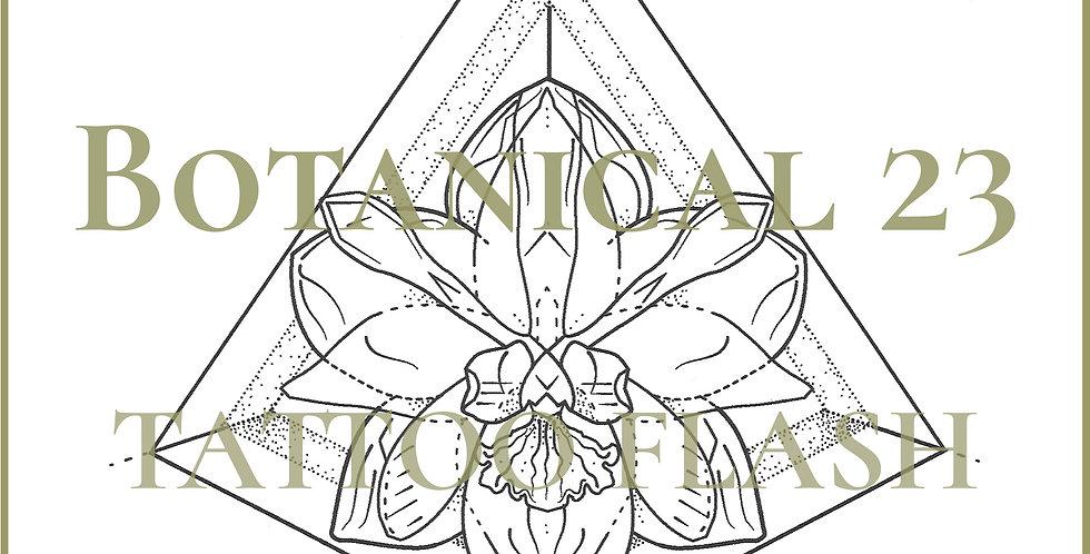 BOTANICAL 23 | Terrarium Orchid