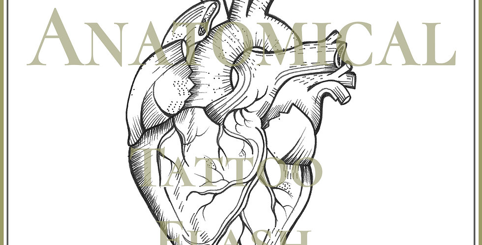 HEART 2 | Anatomical
