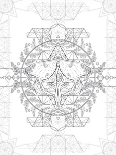 Insect Metatron | Leather Art | Vector WIP