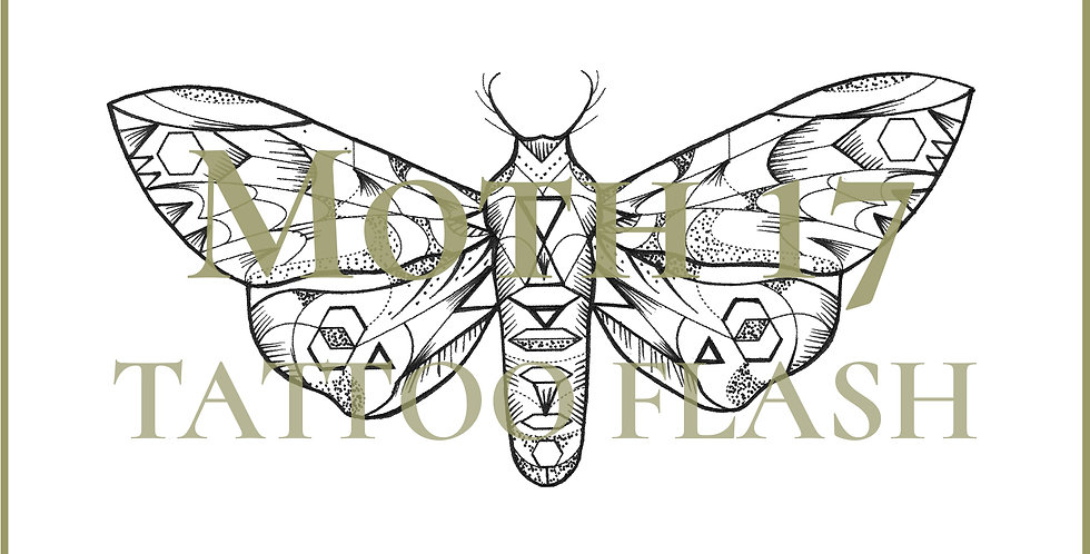 MOTH 17 | Antennae Hawk