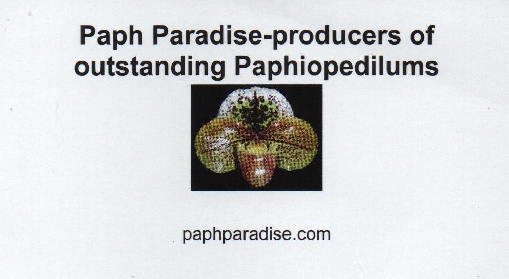 Paph Paradise 2