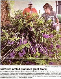 "Best in Show 'Dendrobium Kaniko"" grown by Karen & Jerome Neizman"