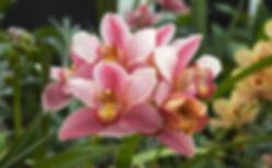 Orchidacea_Cymbidium.jpg