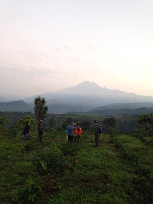 GUATEMALA コーヒー農園視察記②