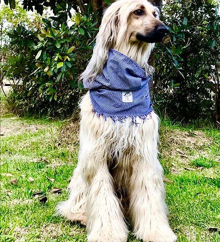 mascotas cuellos pañoleta cuellera
