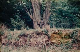 """""""Untitled"""" (de la serie Silueta en Iowa), 1976-1978."""