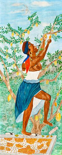 Recolte du cacao, 1950.