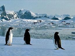 Penguins 1.jpg