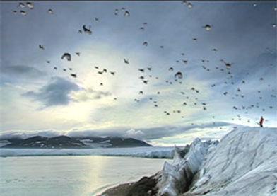 Penguins 3.jpg