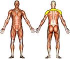Shulder Stretch