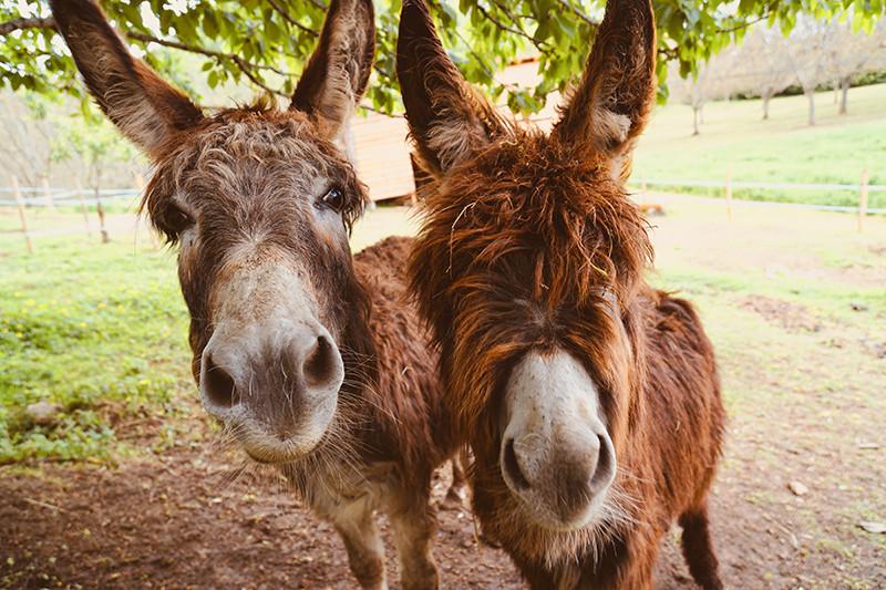 Uitstapjes en vakantie in Nederland met het gezin, wandelen met een ezel