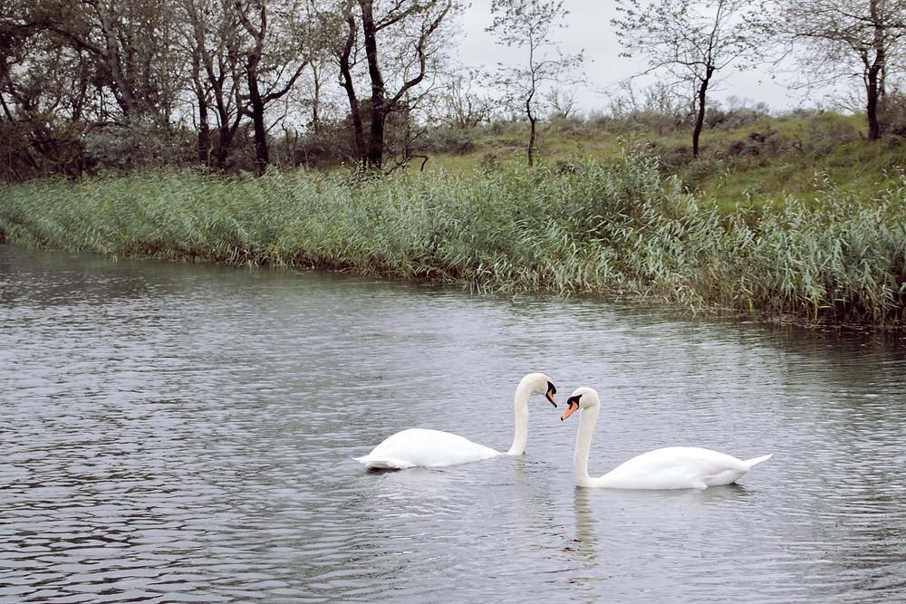 Dagje weg met gezin, ontdek een van de mooiste natuurgebieden in Nederland.
