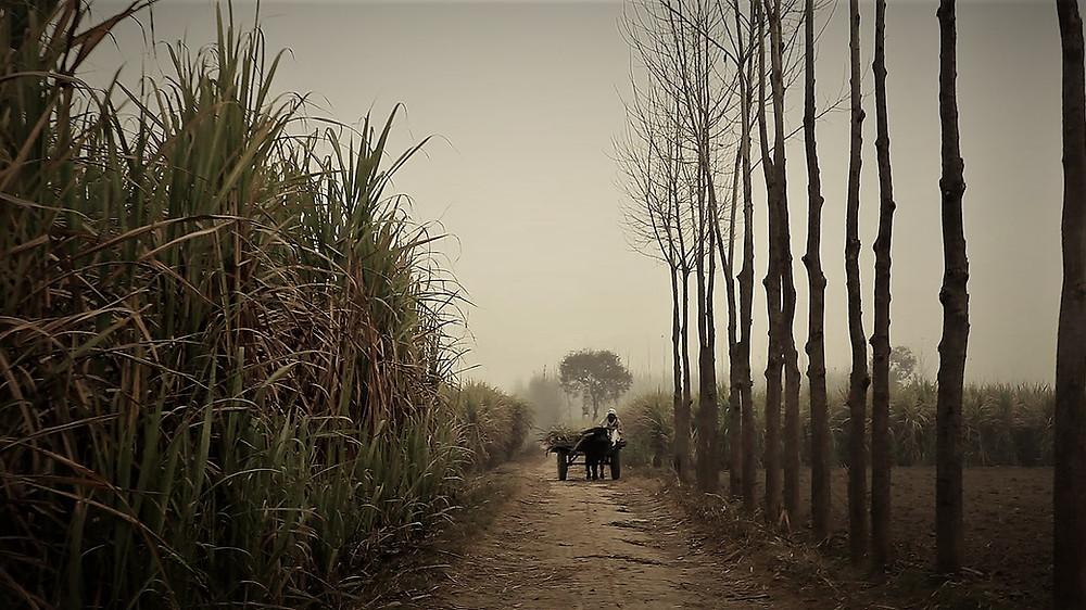 Caption from Muzaffarnagar Baaqi Hai (Nakul Singh Sawhney, 2015)