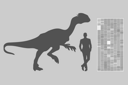 To Scale