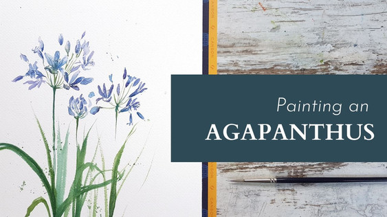 Painting an Agapanthus