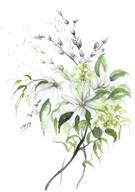 White Magnlia Posy