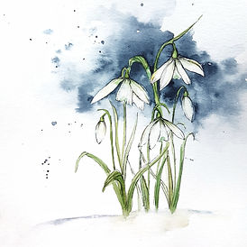 watercolor snowdrops in line and wash