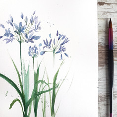 Agapanthus in a loose style