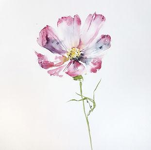Loose watercolor flower cosmo