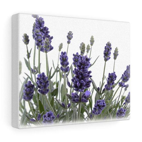 Custom Lavender Canvas Wrap
