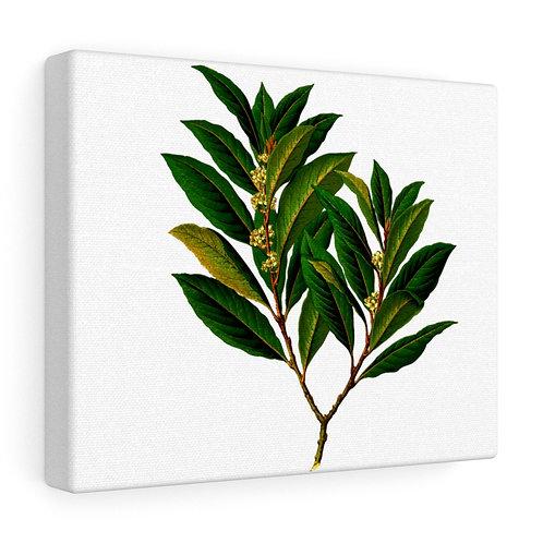 Custom Bay Leaf Canvas Wrap