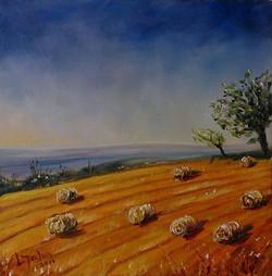 """September Gold"" oils - 20 x 20cms"