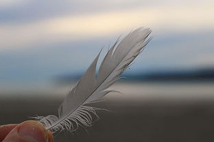 TS feather.jpg