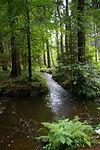 Ausflug in den Tarandter Wald