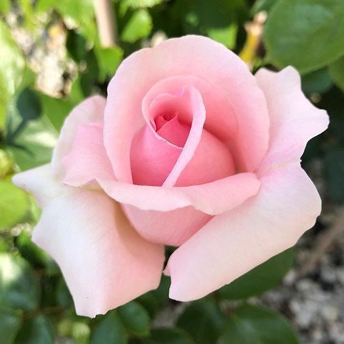 Transmissie eenheidsliefdesveld, haal je liefde en schoonheid op!