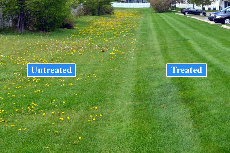 Weed Control & Fert 5.jpg