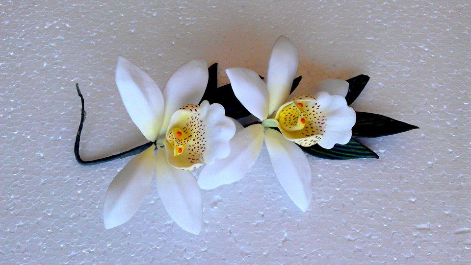 orquidea cymbidium 2