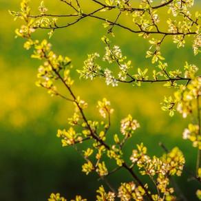 """""""봄은 살며시 그리고 분명히 다가온다."""" 3월 수련시간 안내!"""