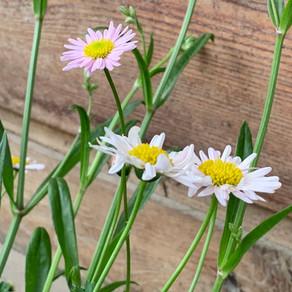 비오는 날 아침 산책 길에 만난 꽃