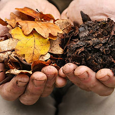 leaf_mold.jpg