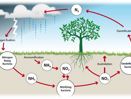 Importance of Nitrogen in Soil & Plants