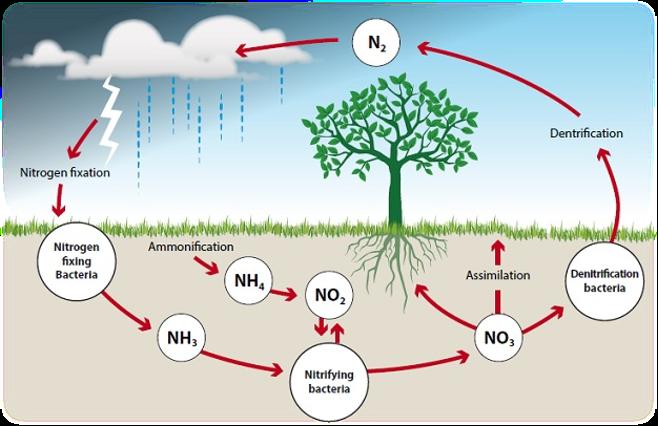 Importance of Nitrogen in Soil & Plants